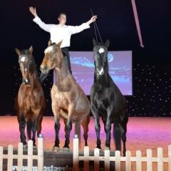Palast der Pferde 2013 – Německo
