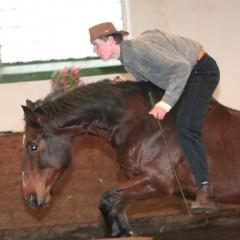 Přehlídka koní v Písku 2009