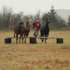 Moje koně – Deny, Apawi a Remi