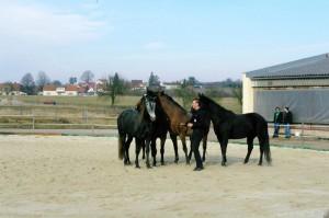 Show se 4 koňmi